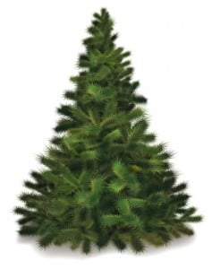 11341334 - christmas tree. realistic illustration of fluffy pine tree