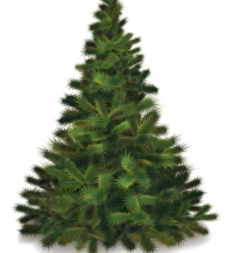 11341334 - christmas tree. realistic illustration of fluffy pine tree