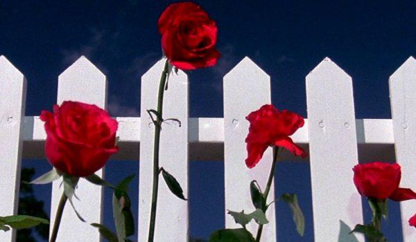blue-velvet-red-roses-1108x0-c-default-1